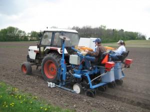 Planting corn plots